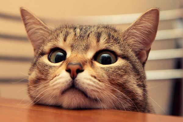 rüyada kedi görmek, rüyada kedi görmek ne demek, rüyada kedi görmek iyi mi
