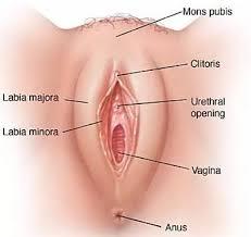 genital bölge beyazlatma, genital bölge kararması, genital estetik operasyonları